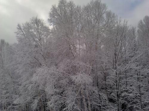 <img:http://elfpack.com/stuff/Winter.jpg?x=500&y=375>