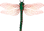 <img:stuff/aj/2605/dragonfly3.png>