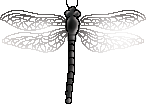 <img:stuff/aj/2605/dragonfly6.png>